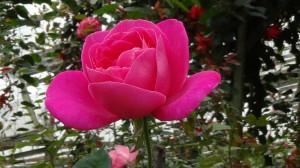 The flora I