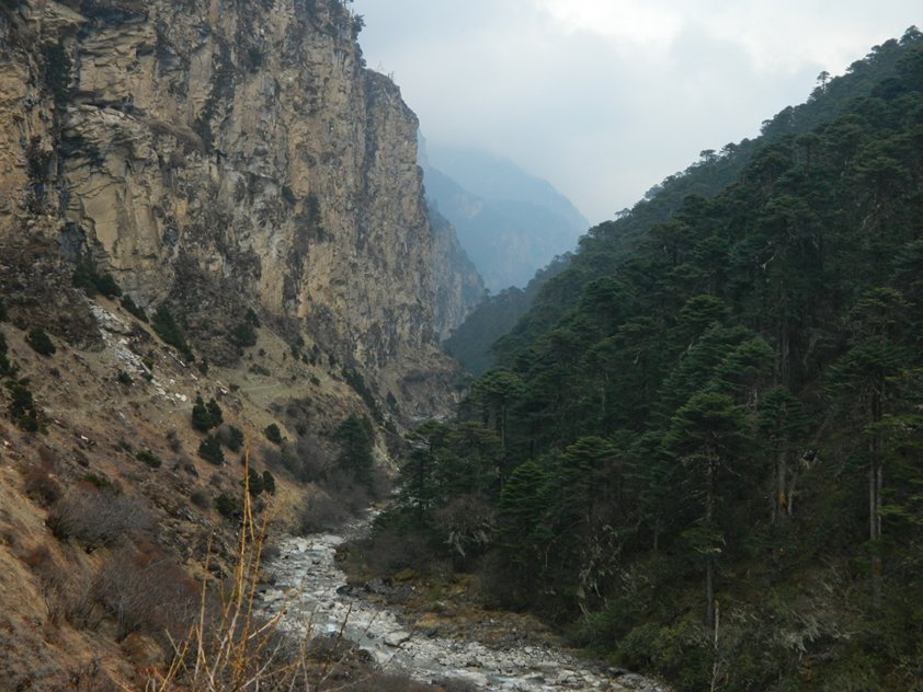 Descending the Wang Chhu valley with steep cliffs on the North side and conifer forest on the South Bank. The trail on the North side is visible below the cliffs.