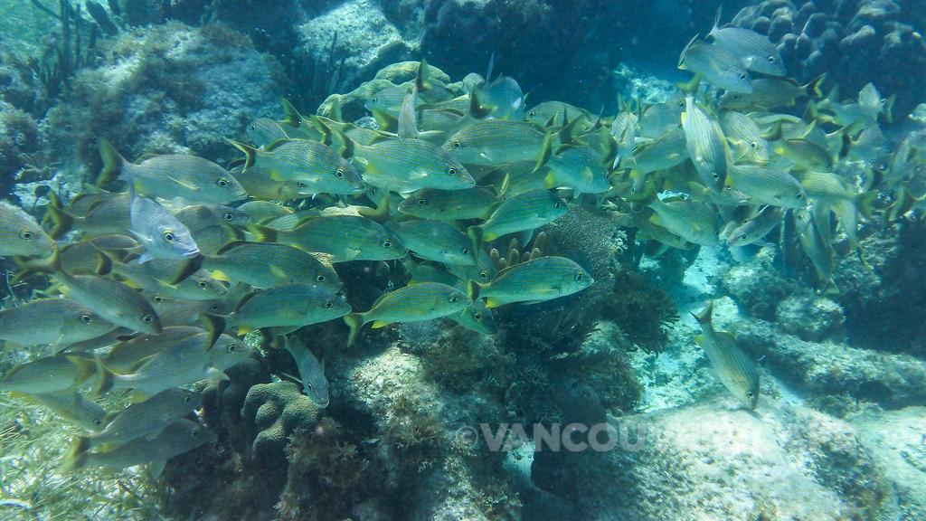 Snorkeling Cancun