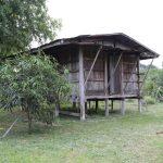 thai-house