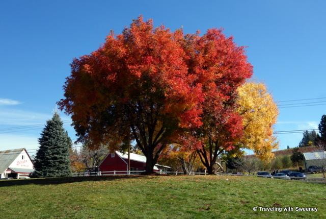 Colorful trees in El Dorado County, Califonria