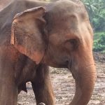Pinnawala-Elephant-Orphanage (4)