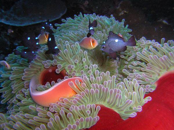 Anemone and fish