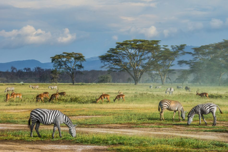 Wildlife Enthusiasts Masai Mara