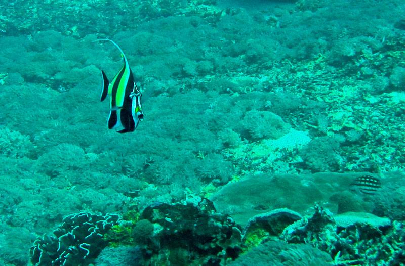 scuba-gili-island (2)