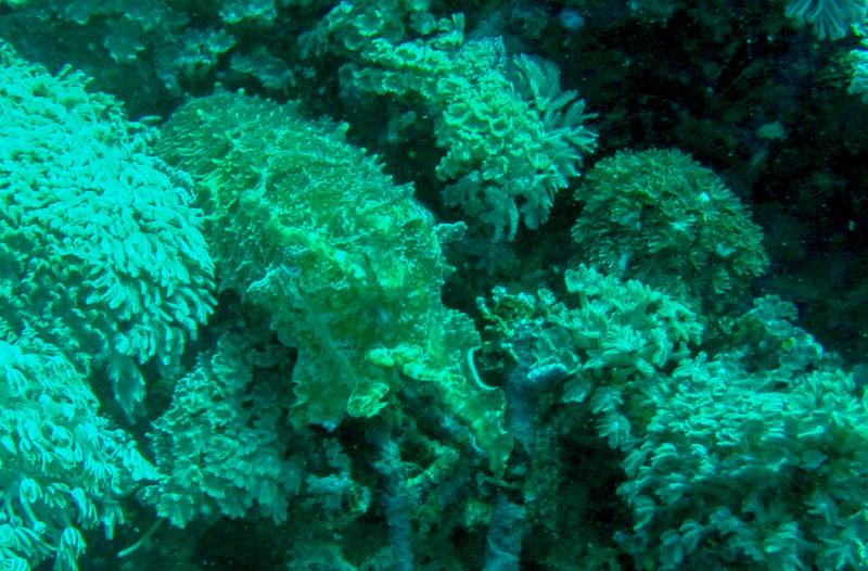 scuba-gili-island (3)