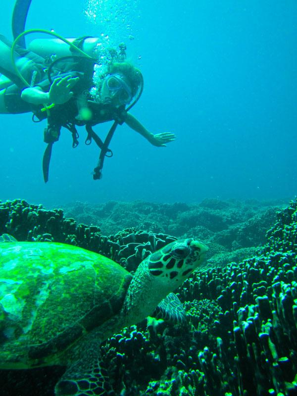 scuba-gili-island (7)