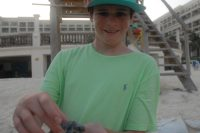 Cancun Sea Turtle Hatching and Release Experience