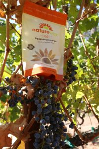 naturebox-napa-vineyard (1)