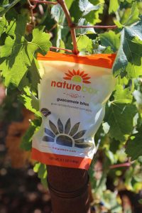 naturebox-napa-vineyard (3)
