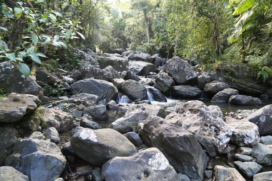 puerto-rico-el-yunque (6)