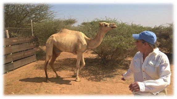Djibouti (11)