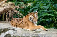 The Berlin Zoolischer Garten Zoo – An Unforgettable Germany Experience