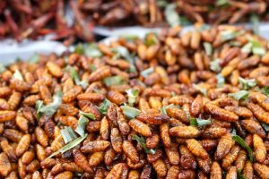 fried-insects