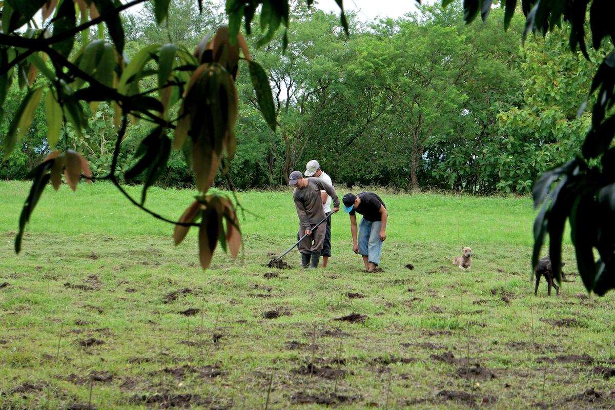 indigo farming