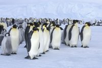 Oceanwide Expeditions announces new departures to the Ross Sea in Antarctica