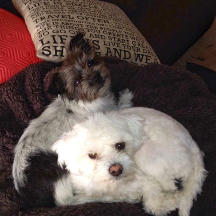 Our fur-babies, Dakota & Mia