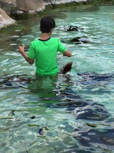 boy feeding stingrays