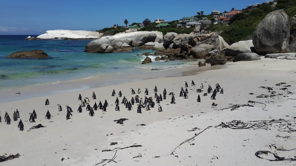 Places to visit in Cape Town.