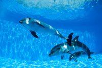 Swim with Dolphins: Good Idea?