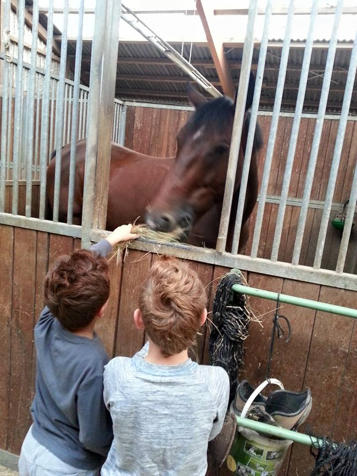 The horses sure seemed to appreciate the extra attention