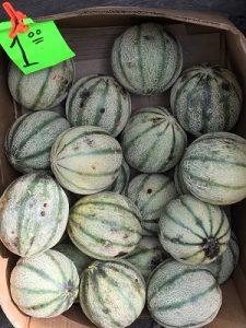 Striped Melons