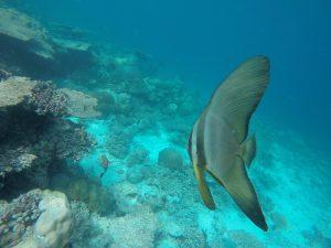baros-island-maldives-marine-life-19