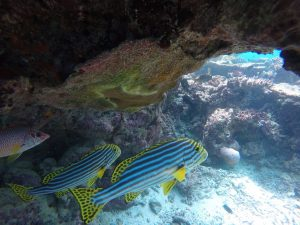 baros-island-maldives-marine-life-21