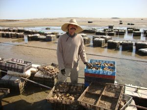La Ostionera Oyster Farm