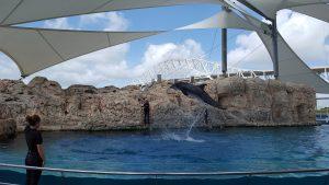 Dolphin Bay Acrobat - Corpus Christi, Texas
