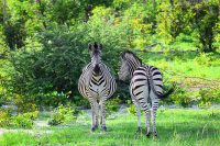 Safari in Botswana – Hospitable, Warm, Welcoming Botswana