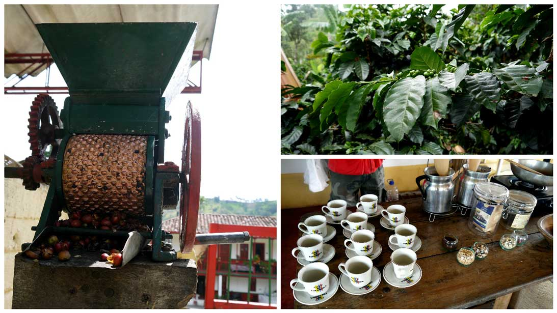 Following the coffee making process from bean to cup at Valle de Cocoro, the coffee triangle, near Salento. One of the most famous coffee production areas in the world.