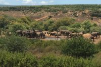 """At the water hole."" Addo National Elephant Park"