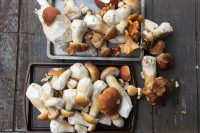 Mushroom Madness in Mendocino County
