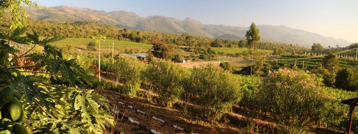 Wine Tasting in Myanmar