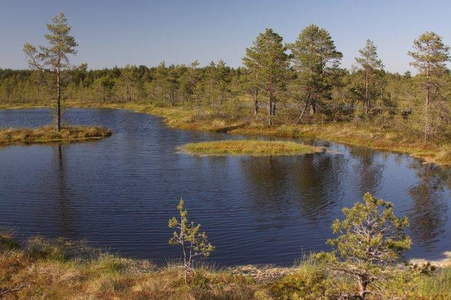 One of the beautiful bog lakes at Viru Bog