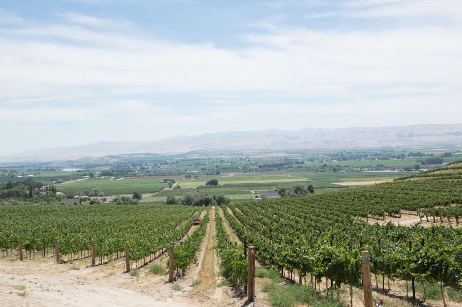 Are you looking for your next adventure? Try Idaho Wine Country
