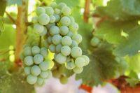 6 Wine Regions You Must Visit in Australia