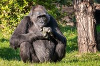 A Dream of Mine, To Take a Gorilla Safari in Uganda