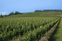 A Dazzling Display of Verdicchio by Italy's Garofoli Winery