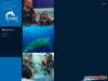 Bali Dive Action