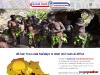 Global Bush Tratour