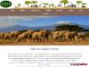 African Travel & Safaris