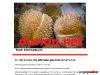 Durian Net