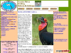 Acacia Birding Tours & Wildlife Photography Safaris