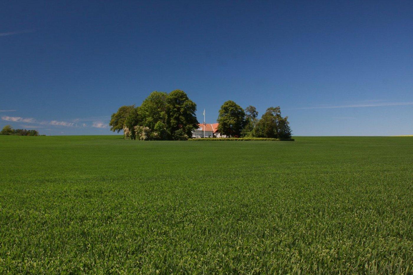 sweden-field