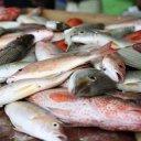 Fish in the market, St. John\'s Antigua - Caribbean