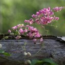 Flowers attracting bees on old tree stump, Antigua