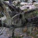 Moss, Tierra del Fuego National Park, Argentina