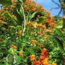 Beautiful flowers near Hana, Maui